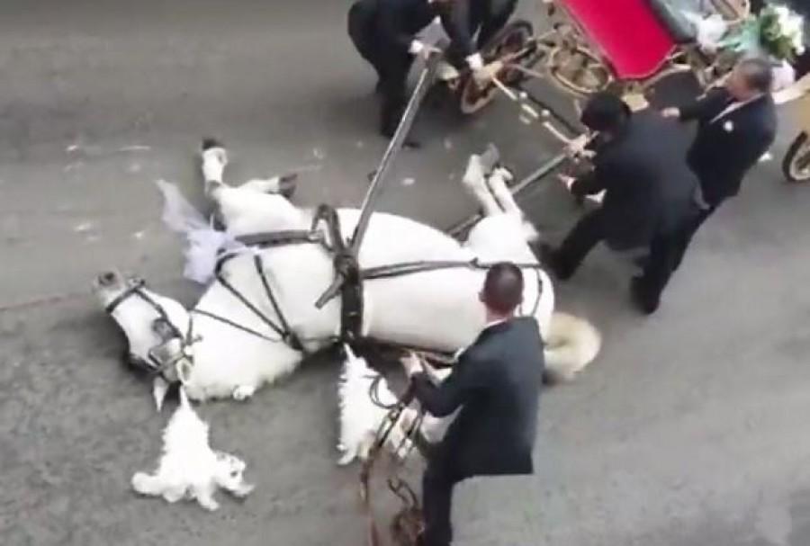 Összeesett a ló, miközben a menyasszonyt és vőlegényt vitte az esküvőre