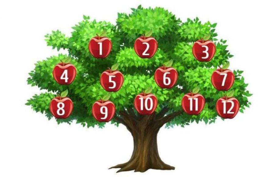 Melyik almát választanád erről a fáról?