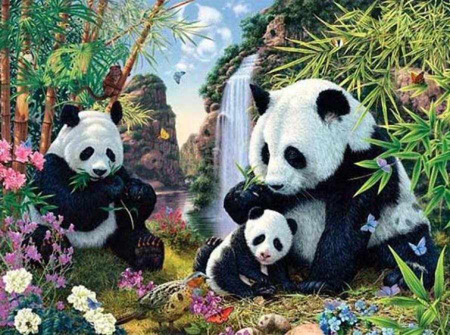 Első ránézésre 3 panda tűnik fel a képen, pedig 12 van!