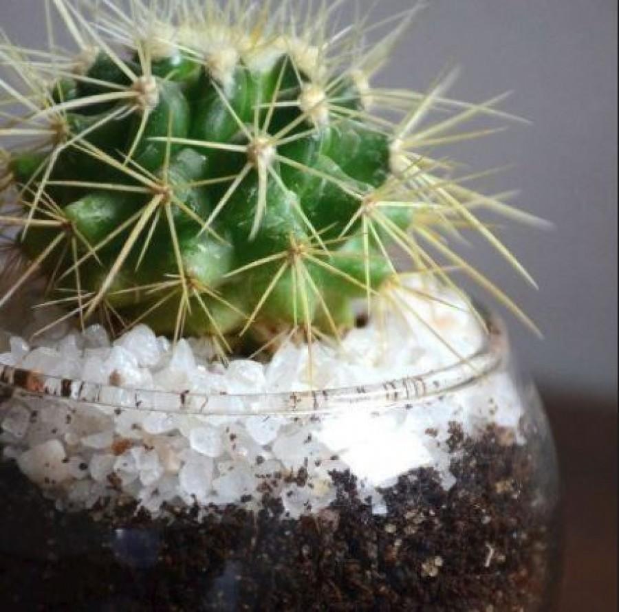Nem találnád ki, hogy miért kell kaktuszt tenni a hálószobádba