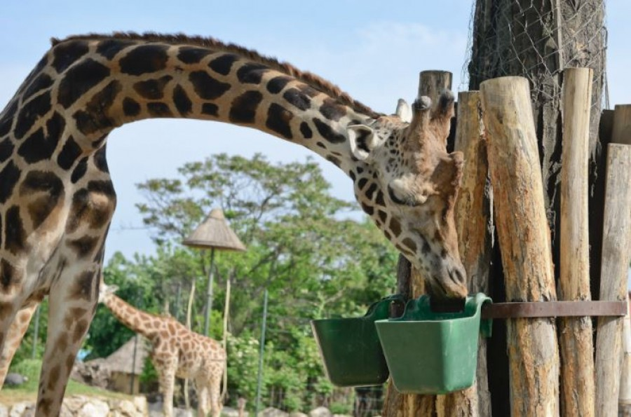 Most érdemes az Állatkertbe menni. Három napig csak 100 Ft!