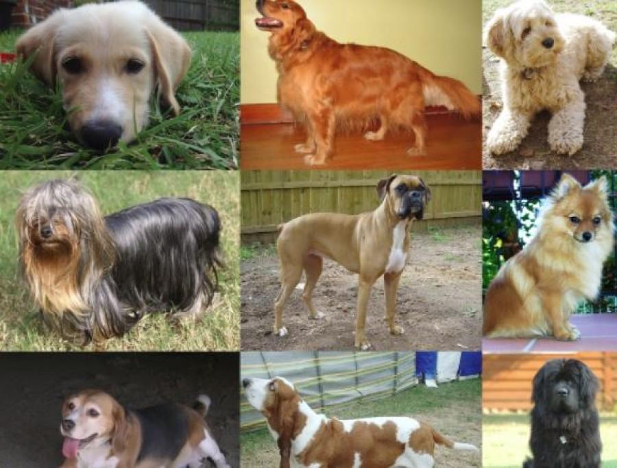 Tudd meg, hogy a csillagjegyed szerint melyik kutyafaj illik hozzád
