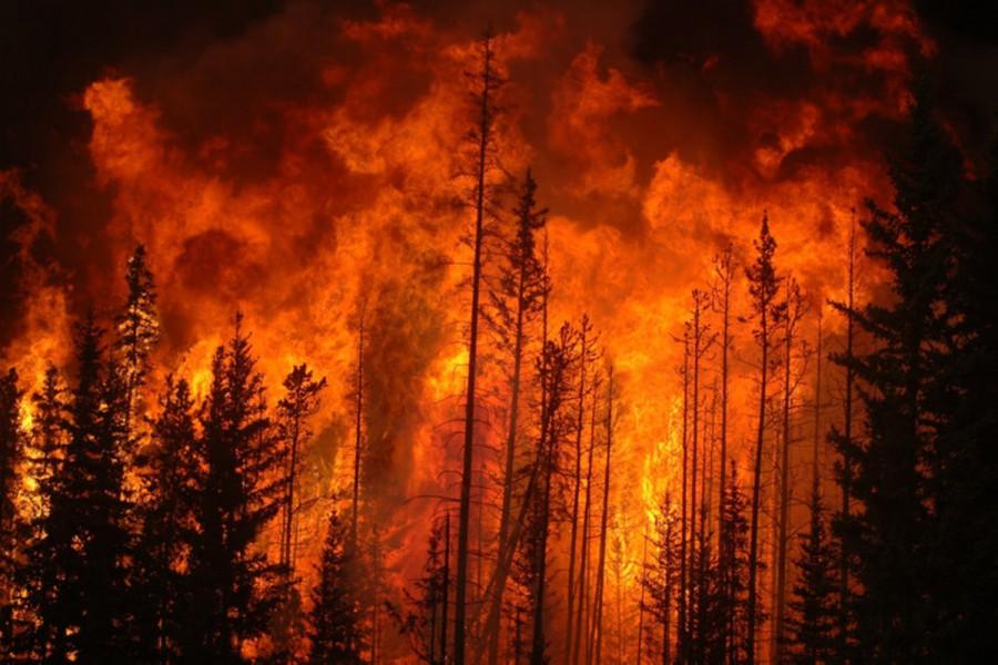 FRISS! Tűz ütött ki a csernobili zónában lévő Vörös-erdőben