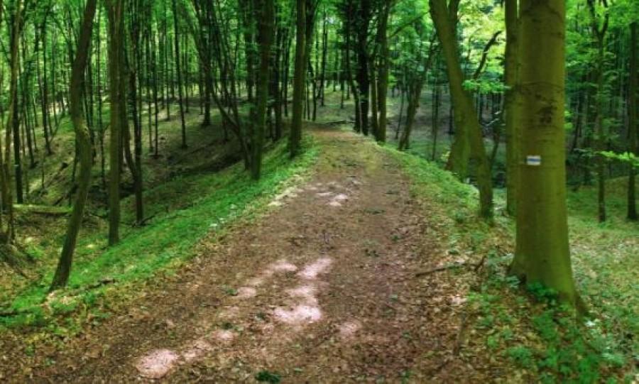 Elveszett egy gyerek a visegrádi erdőben