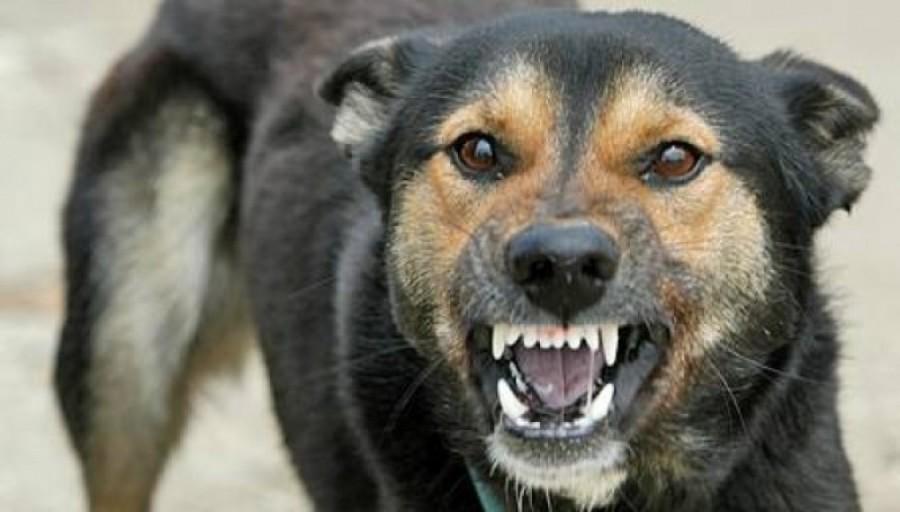 7 hasznos tanács, hogy elkerüld a kóbor kutya támadást!
