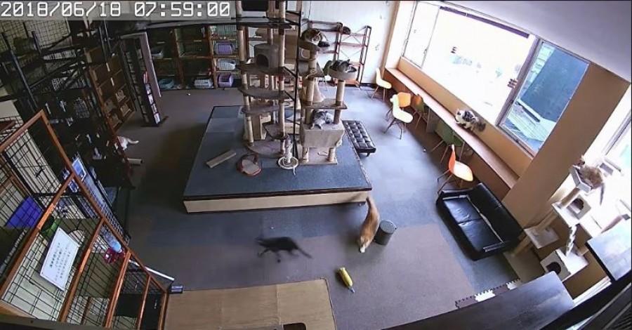 """Különleges videót rögzített egy japán """"macskakávézó"""